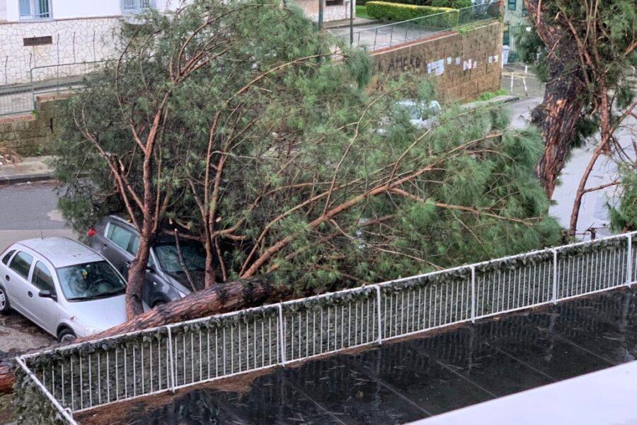 Maltempo, a Napoli crollano alberi: tragedia sfiorata in più quartieri