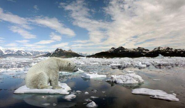 """Clima, 2020 l'anno più caldo di sempre: """"È l'ennesimo promemoria di un'emergenza globale"""""""