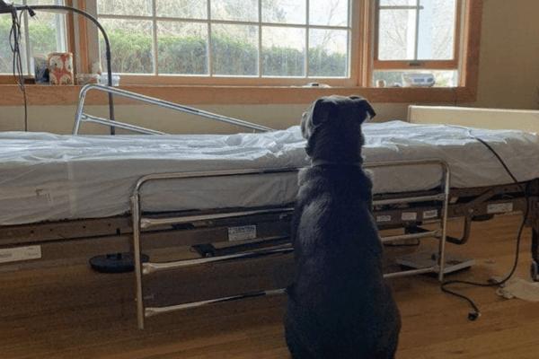 Moose come Hachiko: la tenera storia di un cane che attende il padrone morto