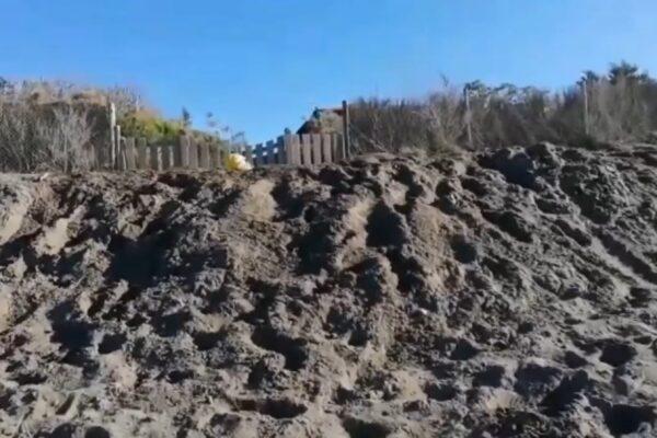 Grillo scava una fossa per gli auguri di Buon Anno