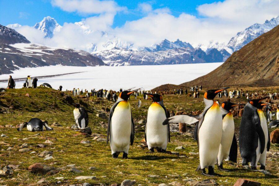 Antartide senza neve, le isole superano i 20 gradi con caldo record