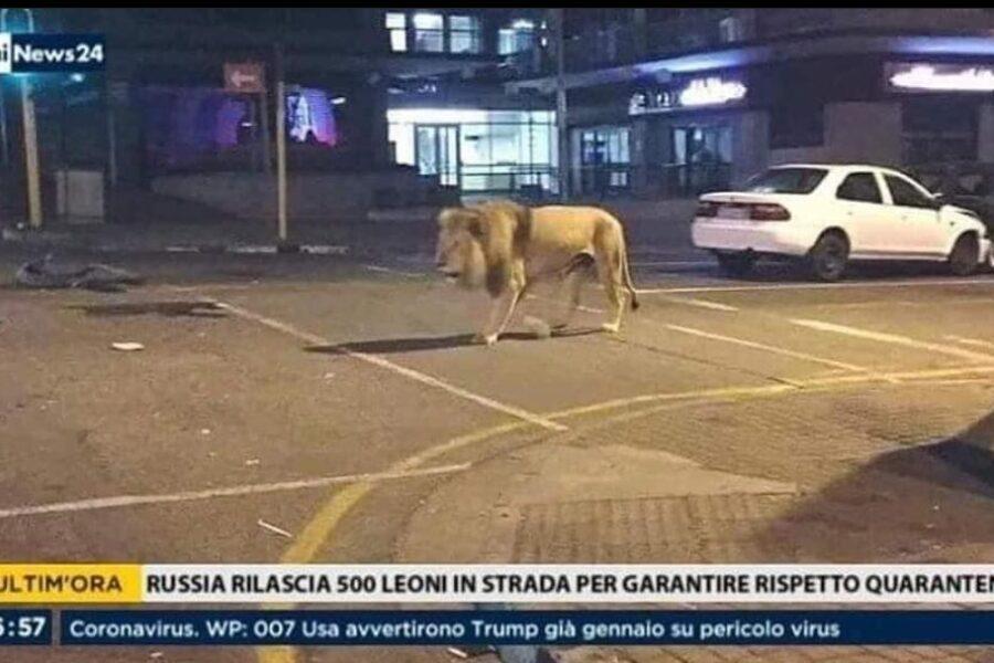 Russia, 500 leoni in strada per garantire quarantena, la bufala che spopola sul web