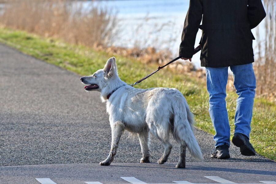"""""""Il cane a passeggio? Deve essere vivo"""", l'incredibile precisazione del sindaco su Facebook"""