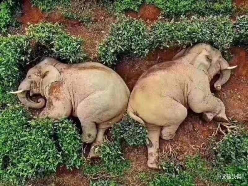 La foto degli elefanti postata sui social