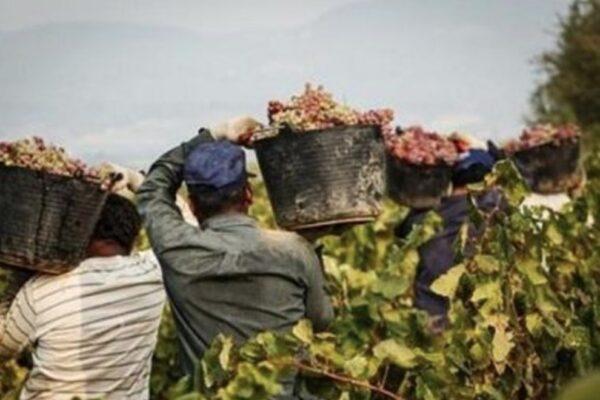 Senza migranti l'agricoltura rischia il collasso, in estate saremo senza frutta e verdura