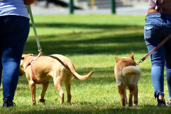 I cani non trasmettono il Coronavirus ma è cosa buona pulirli dopo la passeggiata