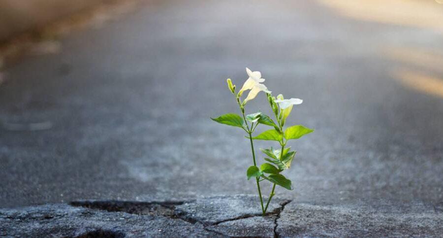 Organizziamo la Speranza: Verso la fase 3