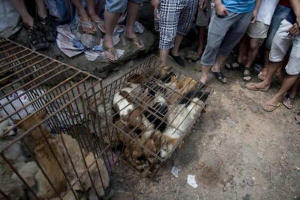 Cani e gatti non potranno più essere mangiati, la 'svolta' cinese