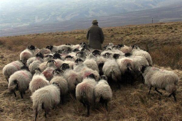 Ode ai pastori, ultimi esempi di un'umanità perduta