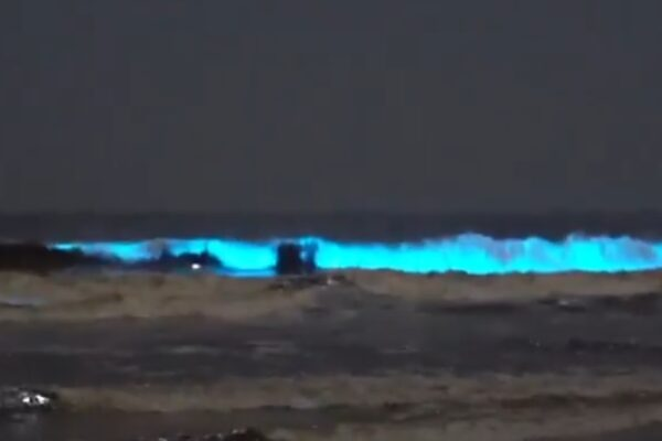 Le onde diventano blu, l'incredibile fenomeno sulle spiagge californiane