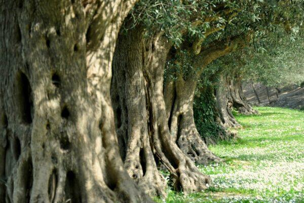 """""""Un albero per ogni vittima di Covid"""", nasce a Firenze il bosco della memoria"""