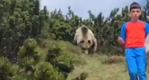"""Bambino incontra orso in montagna, non perde la calma: """"Se succede fate come Alessandro"""""""