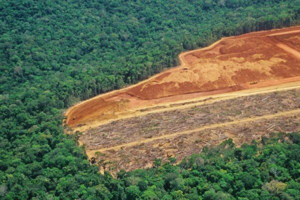 Deforestazione e COVID-19, due facce di una stessa medaglia