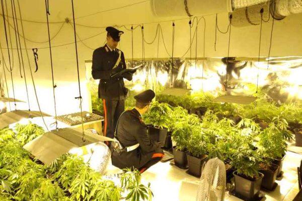 Bambina precipita dal balcone in giardino, la polizia trova piantagione di marijuana