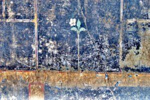 """Pompei, l'enigma di """"Mummia"""" il graffito emerso tra gli scavi"""