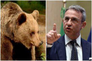 """Caccia all'orso, il ministro Costa contro la Provincia di Trento: """"No all'abbattimento"""""""