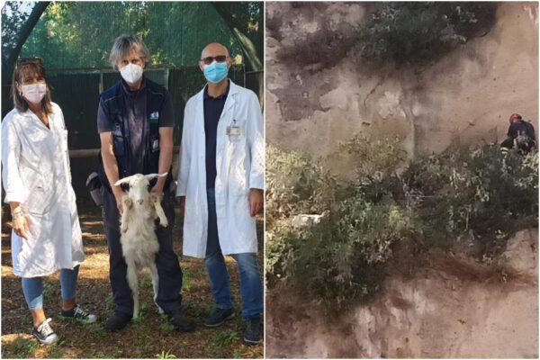 Vigili del fuoco e veterinari Asl Napoli 1 salvano piccola capra precipitata in un burrone