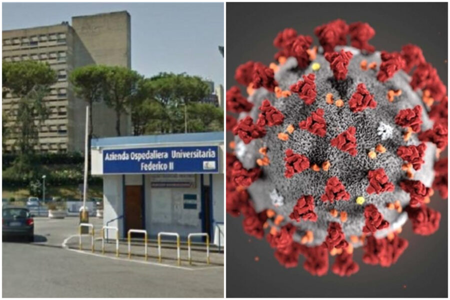 Svolta nella ricerca sul Covid, da Napoli lo studio che impedisce al virus l'ingresso nelle cellule