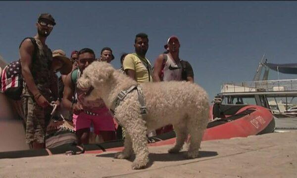 A Tripoli è strage di profughi, ma in Italia si parla del cagnolino tunisino…