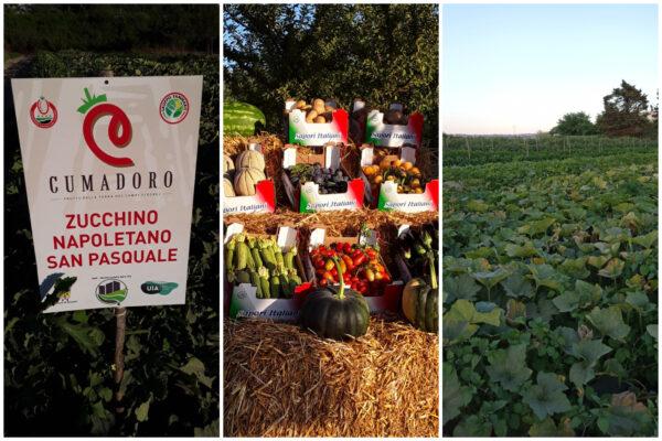 Da terreni incolti a fiorenti campi agricoli, il miracolo del progetto Monteruscello Agro City