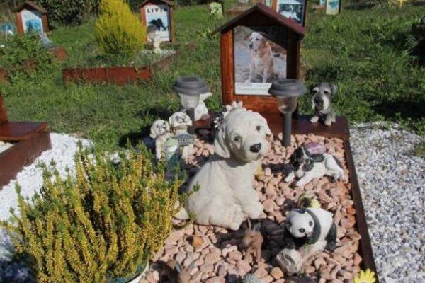 """Varese avrà un cimitero per cani e gatti: """"Così ricorderemo i nostri animali da compagnia"""""""