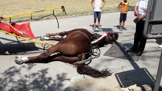 Stramazzano sotto il sole: indigna più un cavallo che muore alla Reggia di Caserta che un bracciante senza diritti