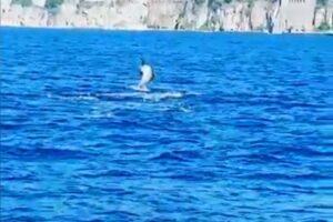 I delfini tornano a giocare a largo del Golfo di Sorrento