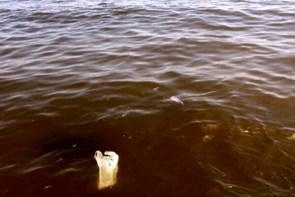 """Scarichi killer a mare, i controlli non bastano più: """"Serve una task force per vigilare"""""""