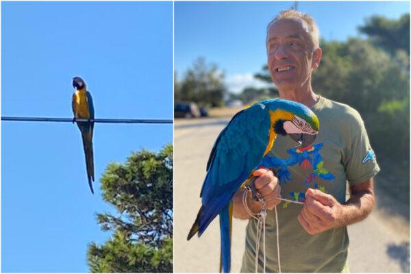 Punta Licosa, pappagalli in volo sul porticciolo regalano 'effetto meraviglia' ai bagnanti