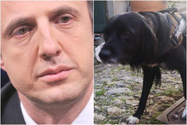 Insegue il cane che scappa dal giardino di casa, Ferruccio Sansa segnalato per violazione della quarantena