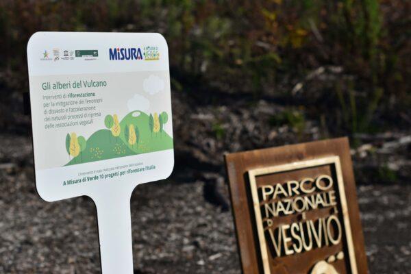 Il parco del Vesuvio rinasce: 1.300 nuovi alberi per la riforestazione del vulcano