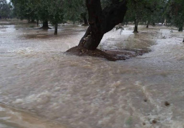 Bomba d'acqua in Campania, allarme per acqua e fango su uliveti dop