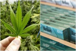 Tabacco riscaldato, abolizione dello sconto e via libera alla cannabis light