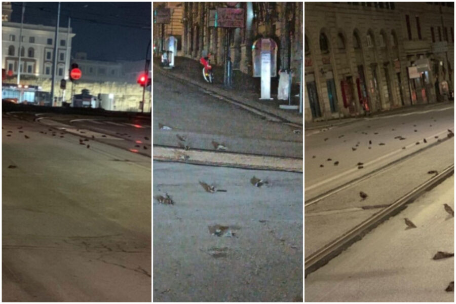 """Roma, strage di uccelli la notte di Capodanno: """"Colpa dei botti"""""""