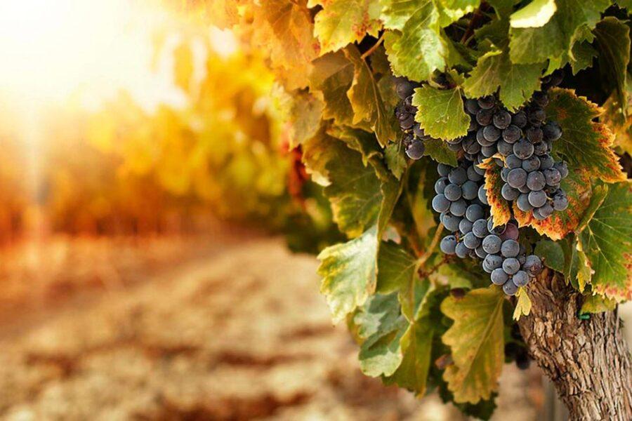 Basta cliché, il vino è anche tecnologia