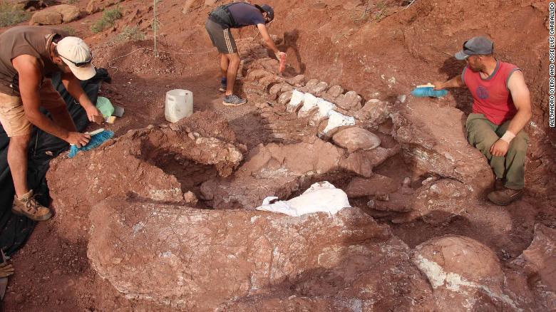 Resti di Ninjatitan scoperti in Argentina, l'enorme dinosauro visse 140 milioni di anni fa
