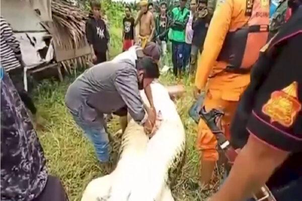 Coccodrillo uccide e sbrana bambino, la tragedia sotto gli occhi del padre