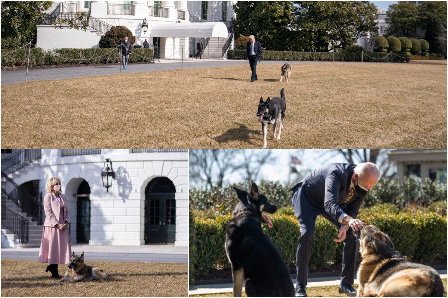 Uno dei pastori tedeschi di Biden aggredisce uomo della scorta: i cani allontanati dalla Casa Bianca