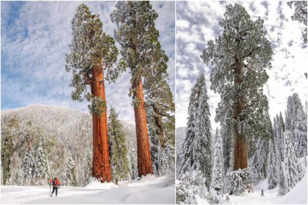 Alder Creek, la più grande foresta di sequoie al mondo acquistata da gruppo ambientalista per salvarla