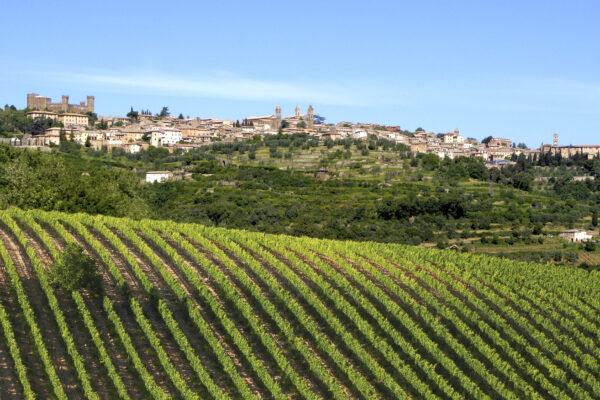 Brunello di Montalcino, perché il 2016 è la migliore annata del decennio