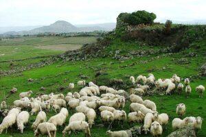 La pastorizia torna di moda: in Italia nasce la prima scuola