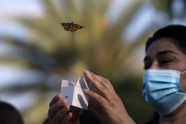 A butterfly is released during an event held to honor health care workers and those who lost loved ones to COVID-19, at Providence St. Jude Medical Center in Fullerton, Calif., Monday, May 10, 2021. (AP Photo/Jae C. Hong)