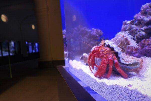 Riapre l'Aquario di Napoli: visite guidate gratuite alla Stazione Zoologica Anton Dohrn
