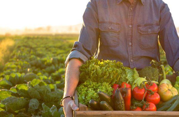 Agrifood, a Roma approvato il piano in Campidoglio