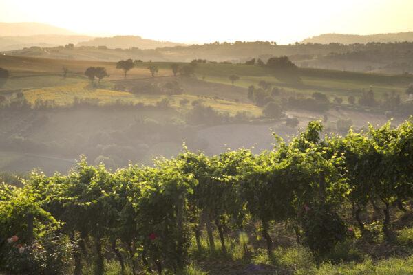 Benvenuti nelle Marche: regione all'avanguardia del green e del vino