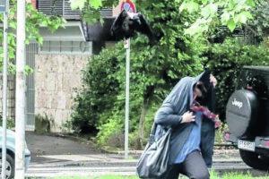 Una cornacchia attacca un passante