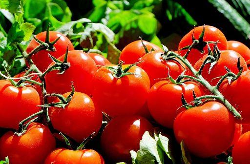 Pomodori contaminati da pesticidi importati da Egitto e Cina e spacciati come 100% italiani