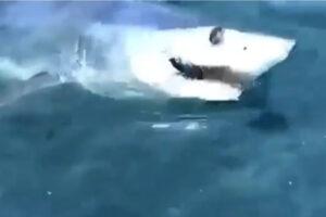 """Allarme squali sul litorale romano, la Capitaneria di porto: """"Fare attenzione"""""""