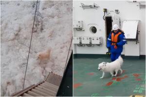Salvato Aika, il cane che si era perso nel gelo dell'Artico
