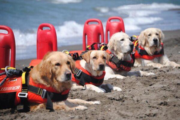 Roma, lo show tricolore dei cani di salvataggio fa impazzire il web